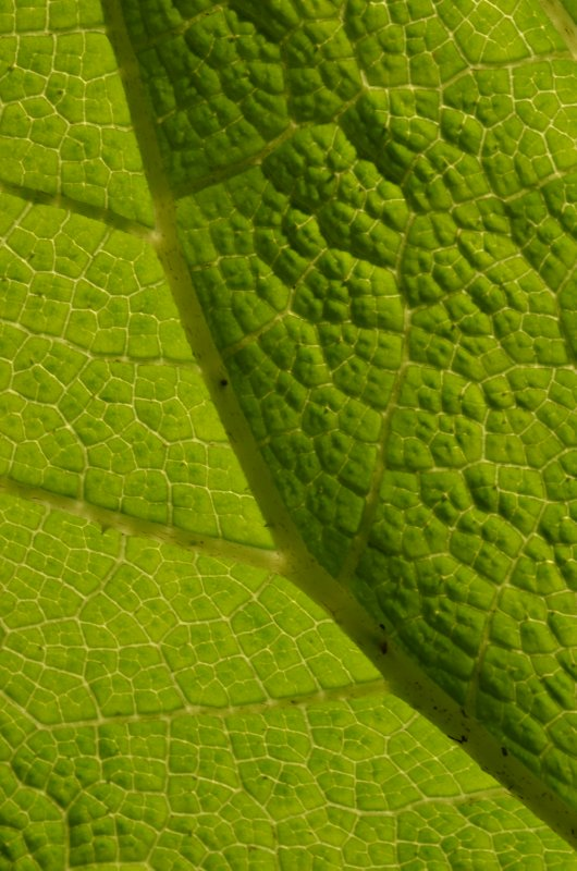 Light Shades on Green Leaf