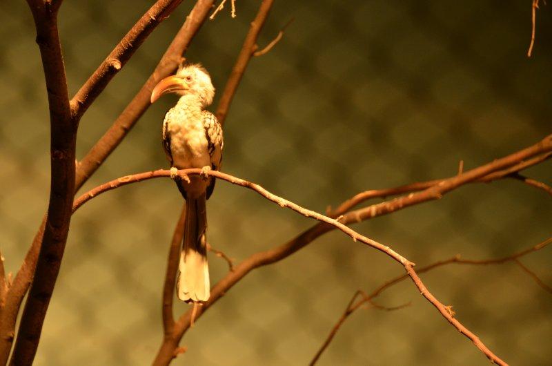 Bird in Good Light