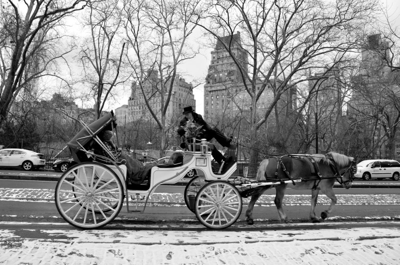 Carriage in New York