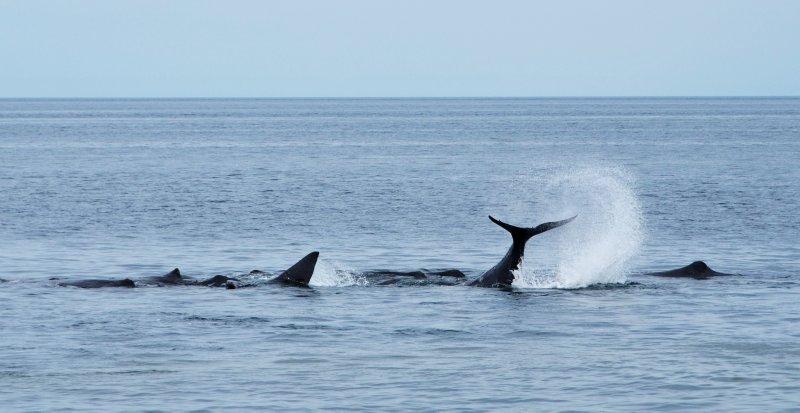 Sperm Whale Warning