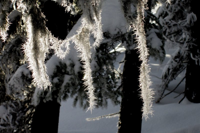 Hoar Frost Chains