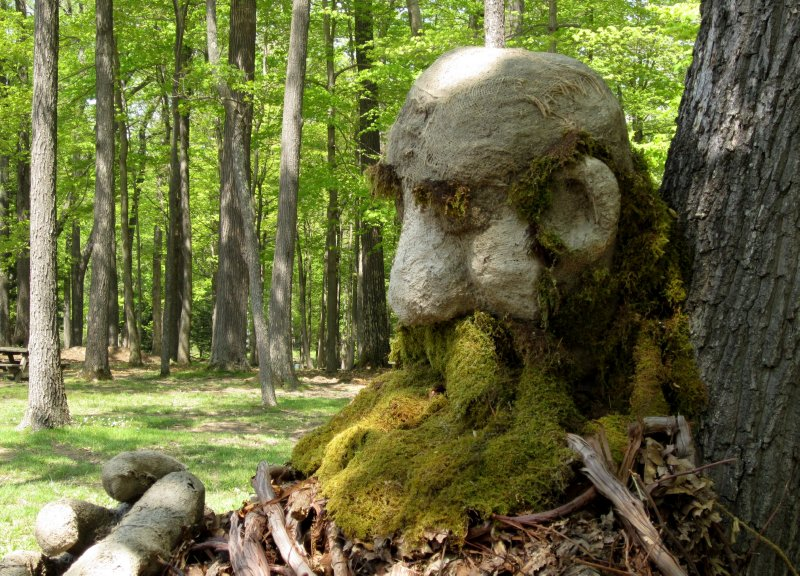 The Forest Giant