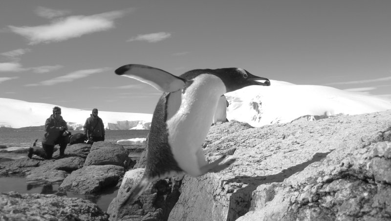 Penguin Leap
