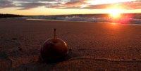 Crab Apple At Sunset