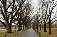 Tree Lined Park Trail