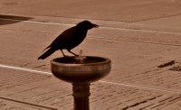 One Thirsty Bird