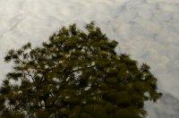 Sky, Tree, Water, Rock