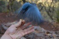 Bird in Motion