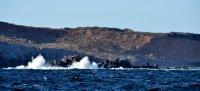 Waves Smashing Off the Rocks
