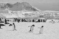 Penguin Chase