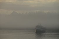 Foggy evening scene