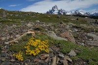 Alpine Flowers and Cerro Fitz Roy