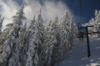 Chairlift and Trees