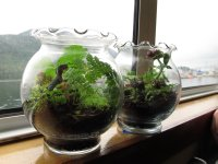 Finished Terrariums