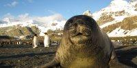 A Curious Seal Pup