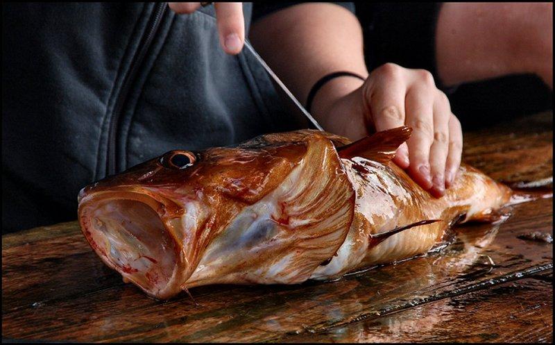 Cod filleting