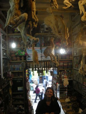 La Paz - the Witches Market - Baby Llamas (Good luck)