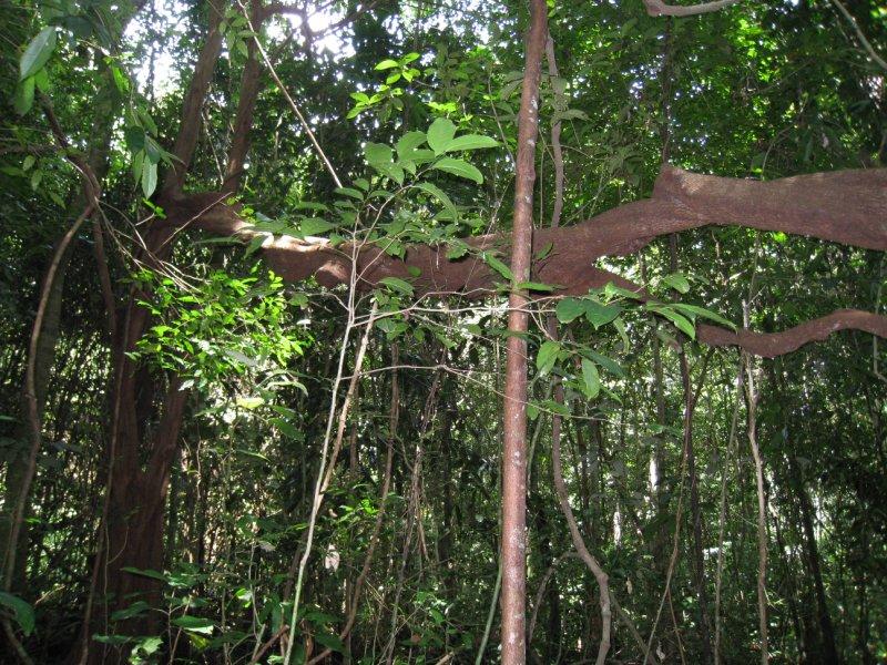 tree on way 2