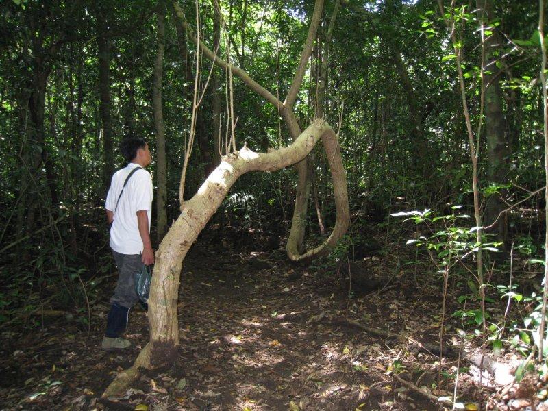 tree on way 4