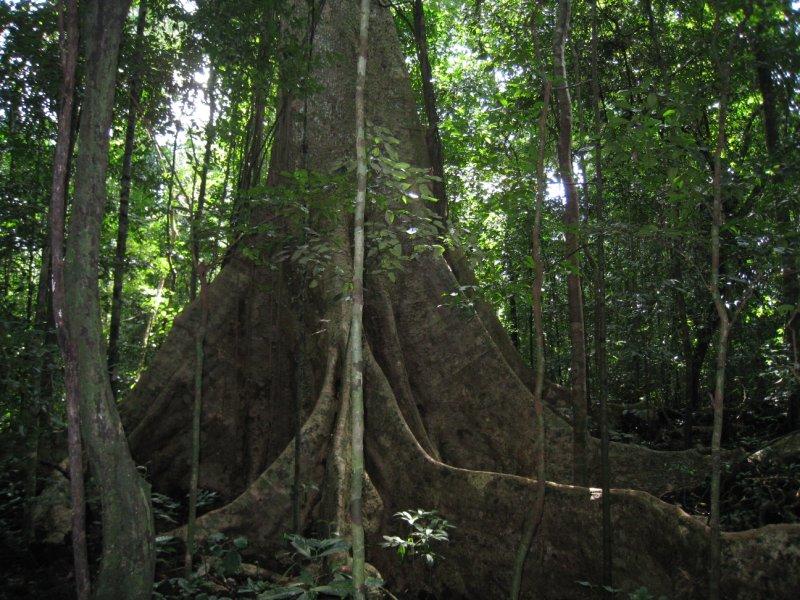 tree on way 6