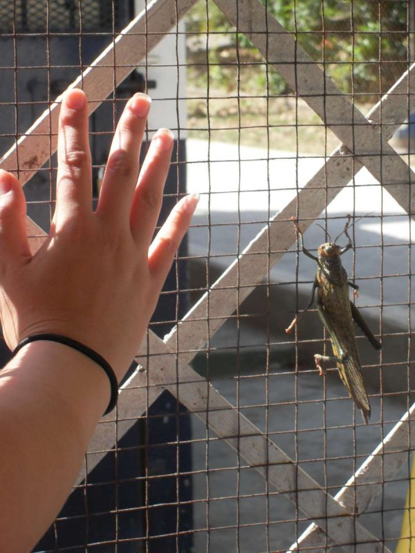 Locust and hand