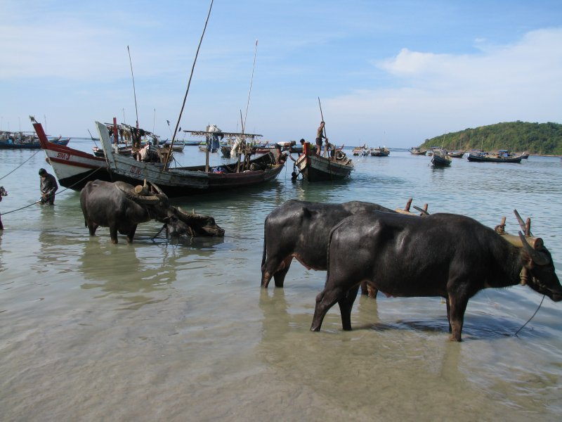 large_ThailandBurma_2445.jpg