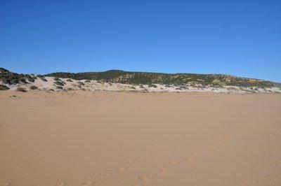 Golden_beach__84_.jpg