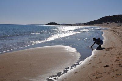 Golden_beach__87_.jpg