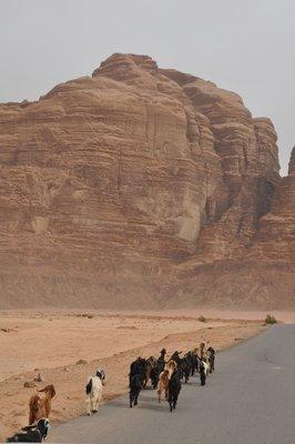 Wadi_Rum__10_.jpg