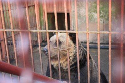 Bear in the cage... so ke lian