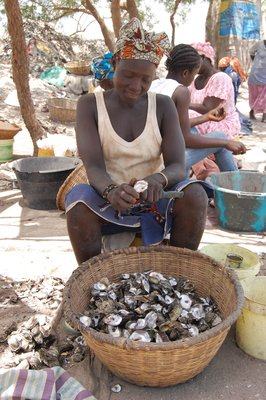 Harvesters process oysters for sale by boiling, shucking, and sorting meat. At some landing sites, such as here at Lamin Lodge, the women have become a tourist attraction with tours of the area including an explanation of the women's work.