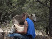 Wild Spirit Wolf Sanctuary New Mexico
