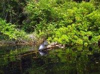 Turtles and Ducks