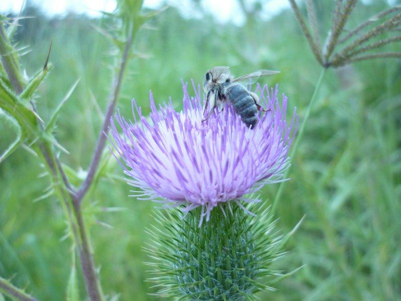 Buzzing Bee.