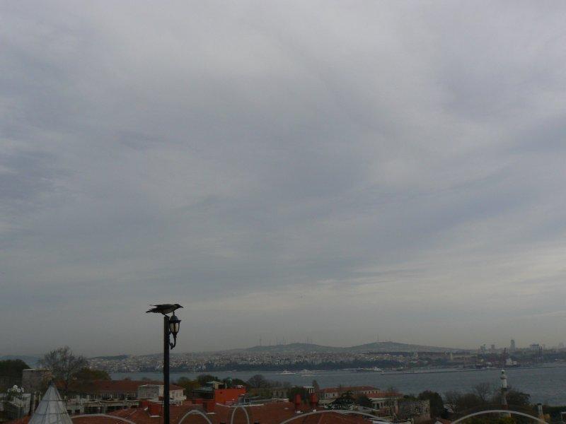 Istanbul crow