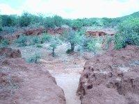 Area 2 sagala Ranch