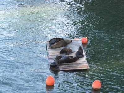Sea-lions hanging out