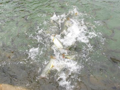 Imagine this scene times 100 as hungry fish went into a feeding frenzy around me....BEN!