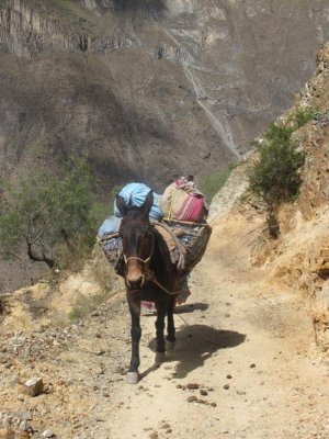We had to be careful of the passing mules on the narrow trail