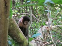 Playful monkeys swung in the trees above us as we walked around the upper circuit