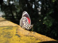 Beautiful butterflies abound at the falls