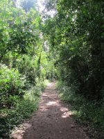 The Macuco Trail weaved through dense jungle and was full of beautiful birds, cheeky monkeys, and lots of mozzies!