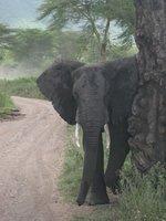 Skummel elefant