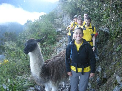 Llama on the path down to Machu Picchu