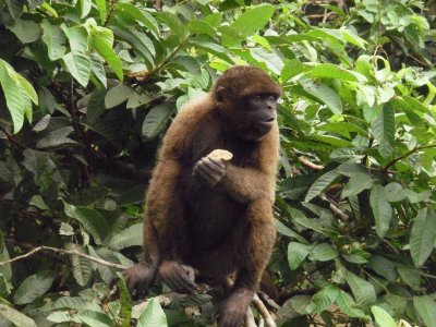 More monkey