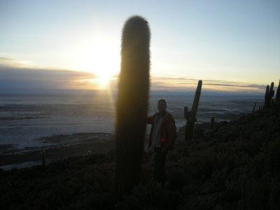 Sunrise and a cactus