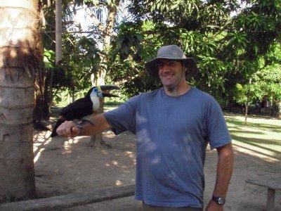 Tame toucan