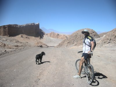 The adopted dog- Valle de Luna