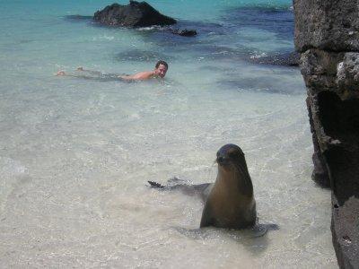 genovesa sea lion and seth