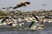 Djoudj National Park
